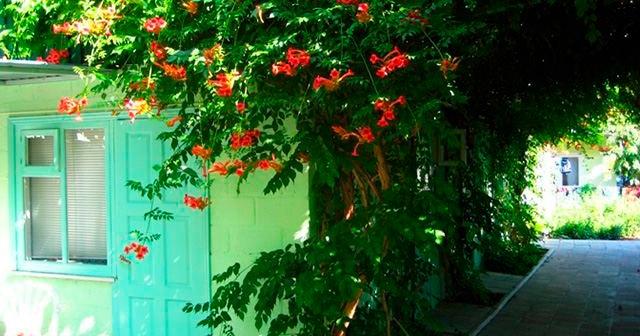 Частный пансионат «Зеленый дворик»